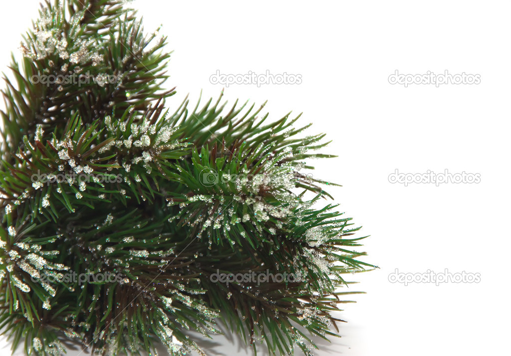 Spruce branches in the snow. — Stock Photo #7945174
