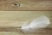 White feather on a board background — Stock Photo