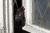 Chat noir derrière une fenêtre — Photo