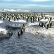 Manchots penguins colony — Stock Photo