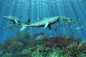 Sharks requins — Stock Photo