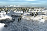 Manchots penguins colony — Stockfoto