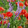 Flowered meadow for background with poppy flowers — Stock Photo #7918226