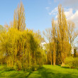 Spring scenery with few willows — Stock Photo
