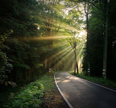 Sunbeams over the road — Stock Photo