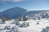Sniezka mountain during the winter — Stock Photo