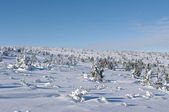 Snow surface with little trees — Stock Photo