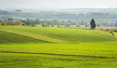 Agricultural view on the fields — Foto de Stock