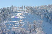 Winter slope with snowy trees — Stock Photo
