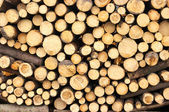 Texture of fireplace wood pile — Stock Photo