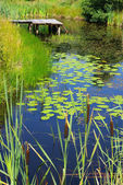 Scenery with pond and water plants — Stock Photo