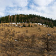 Early spring panorama with forest — Stock Photo