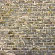 Stock Photo: Wall in green tone