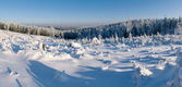 Winter panorama with forest in hills — Stock Photo