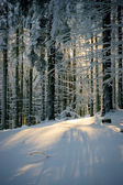 Scene in forest with sun behind the trees — Stock Photo