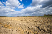 Agricultural view with dramatic sky — Stock Photo