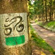 Bicycle tourist track in the forest — Stock Photo