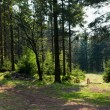 Panorama with Czech border in the forest — Stock Photo