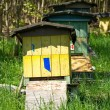 Row of beehives — Stock Photo