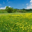 Green meadow with yellow flowers — Stock Photo