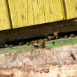 Bees in the entrance to beehive — Stock Photo