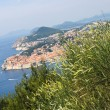 View on Dubrovnik with clump of grass on first plan, Croatia — Stock Photo #7933557