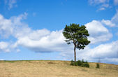Lonely tree and beautiful sky — Stock Photo