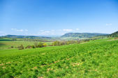 Fresh green scene during the spring — Stock Photo