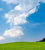 Scene with green meadow and blue sky — Stock Photo