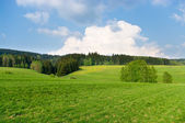 Spring landscape near the forest — Stock Photo