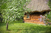 Rural scene with flowered trees and wooden cottage — Photo