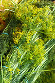 A bunch of dill for sour — Stock Photo