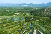 Landbouwareaal in de rivierdelta neretva in kroatië — Stockfoto