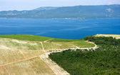 Vineyard on the seashore in Croatia — Stock Photo