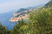View on Dubrovnik with clump of grass on first plan, Croatia — Stock Photo