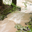 Stock Photo: Stream after rain
