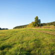 Landscape with grass — Stock Photo #7948977