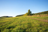 Landscape with grass — Stock Photo
