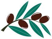 Rama de olivo — Stock Vector