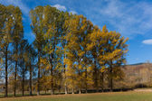 Trees in aurumn, Espinosa de los monteros, Burgos, Castilla y Le — Stock Photo