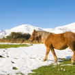 Stock Photo: Horse in Alto Campoo, Cantabria, Spain
