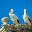 Storks in the cathedral of Salamanca, Spain — Stock Photo