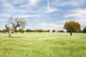 Pasture in Extremadura, Caceres, Extemadura (Spain) — Stockfoto