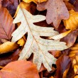 Leaves in Autumn, Sierra de la Demanda, Burgos, Spain - Stock Photo