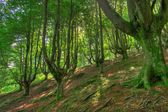 Wood in the natural park of Gorbeia — Stock Photo