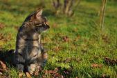 Tabby cat in the autumn garden — Stock Photo