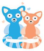 Lovers raccoons — Stock Photo