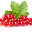 Stock Photo: Red currant with green leaf