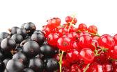 Grosella negra y roja — Foto de Stock