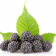 Stock Photo: Ripe blackberry with green leaf